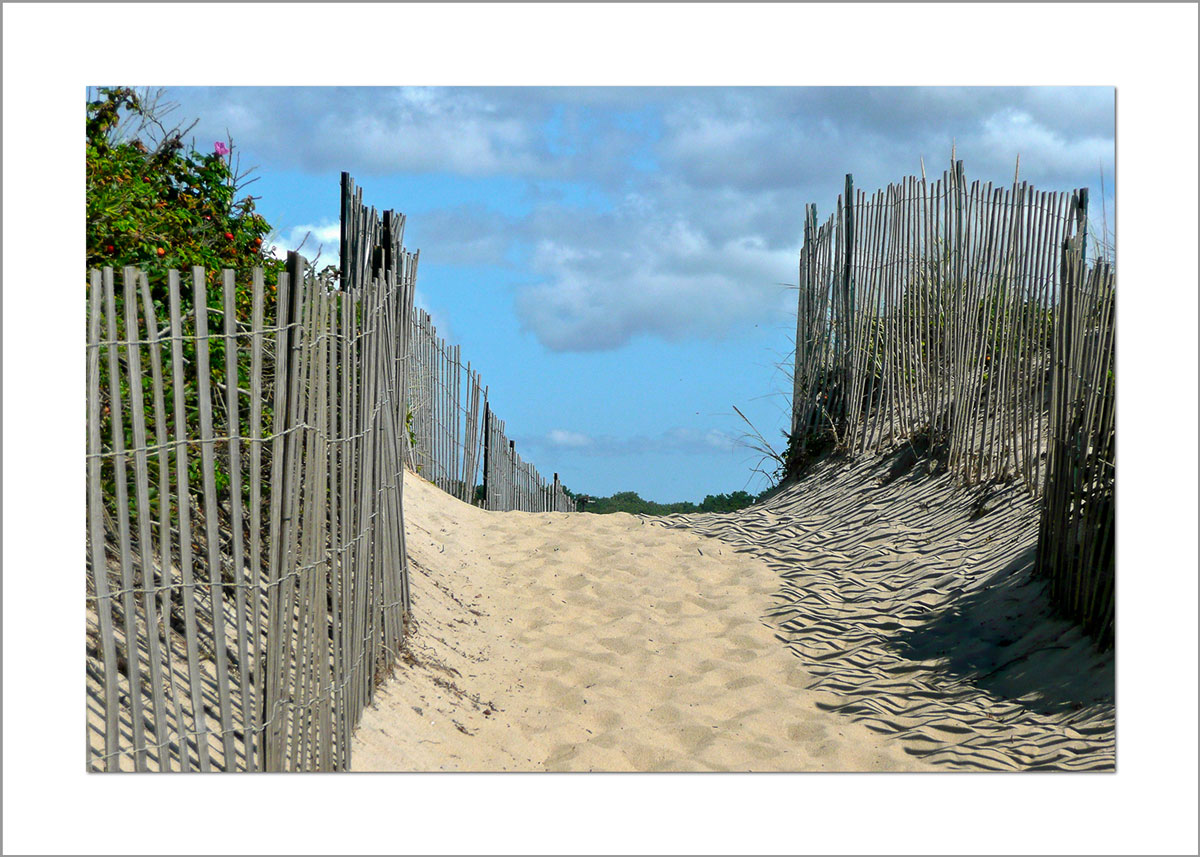 5x7 Photo Card: Long Point Fence