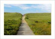 5×7 Photo Card: South Beach Wooden Path 1