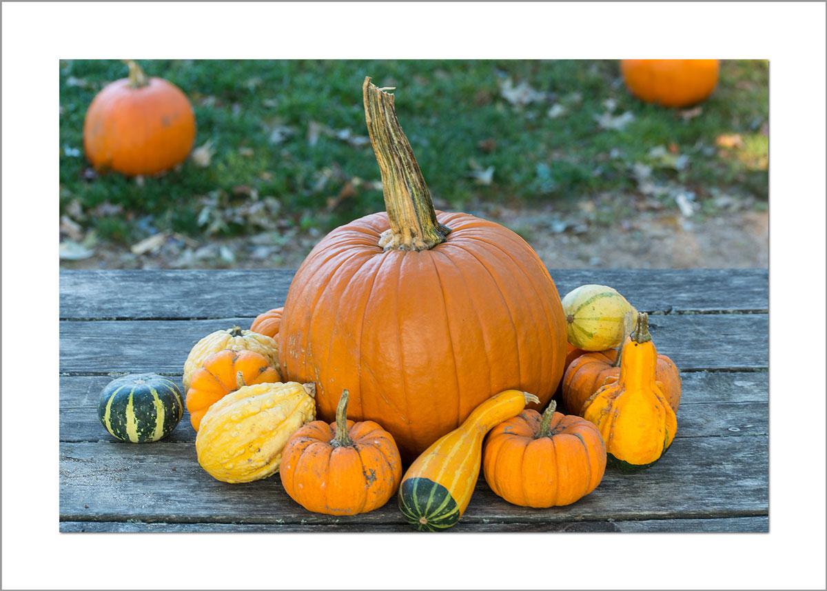 5x7 Photo Card: Pumpkins on Table