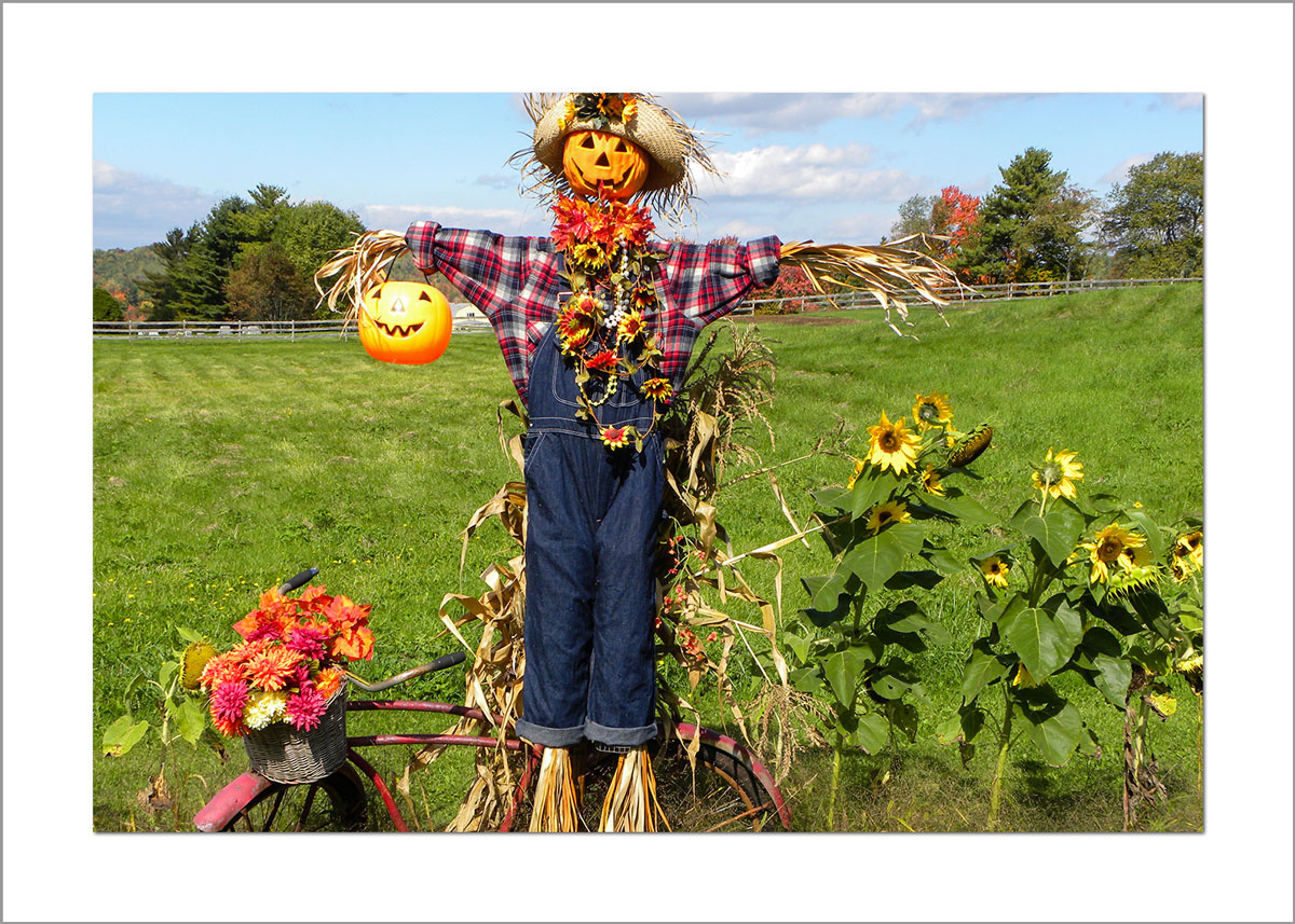 5x7 Photo Card: Scarecrow