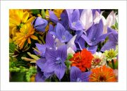 5×7 Photo Card: Bouquet Balloon Flower 1