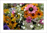5×7 Photo Card: Bouquet PInk Daisy 1