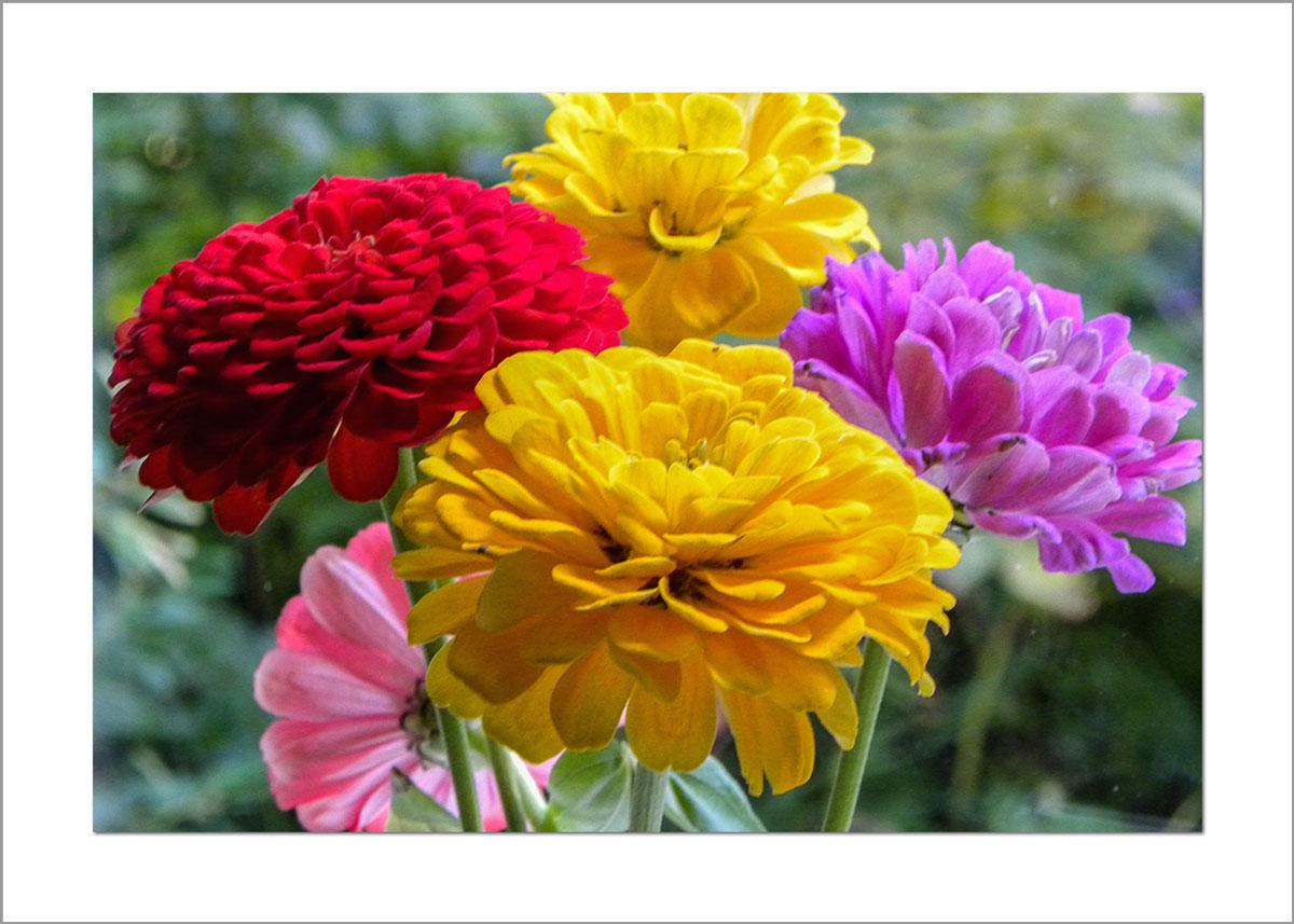 5x7 Photo Card: Bouquet Zinnias
