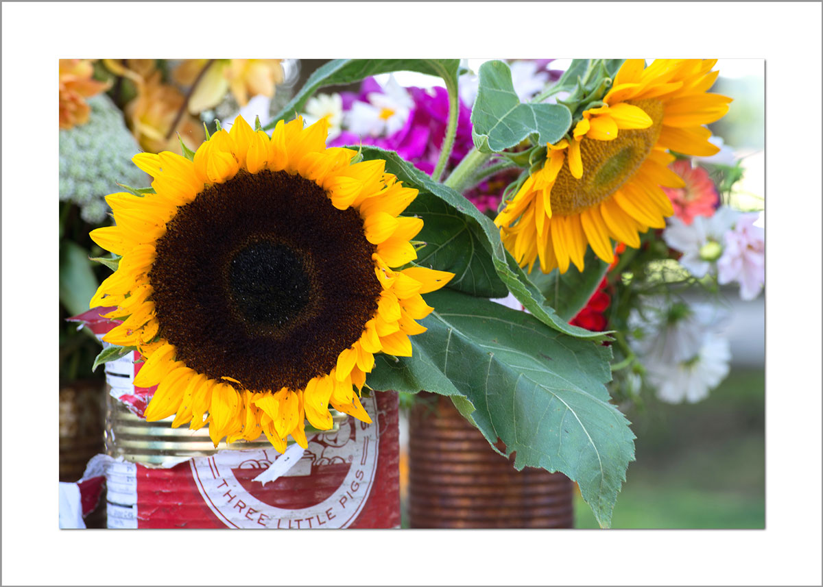 5x7 Photo Card: Sunflowers Farmer's Market