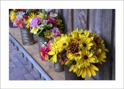 5×7 Photo Card: Sunflowers in Cans 1
