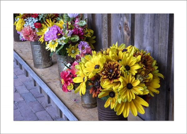5x7 Photo Card: Sunflowers in Cans