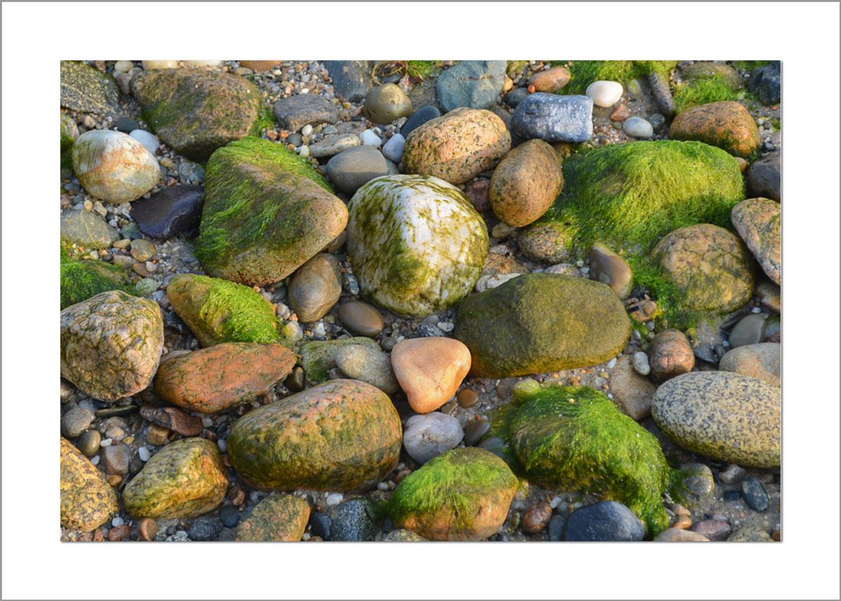 5x7 Photo Card: Mossy Rocks