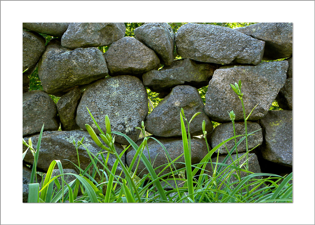5x7 Photo Card: Stone Wall - Polly Hill