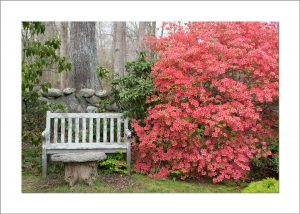 5x7 Photo Card: Azalea and Bench