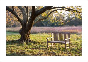 5x7 Photo Card: Bench at Polly HIll