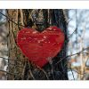 5x7 Photo Card: Heart on Tree