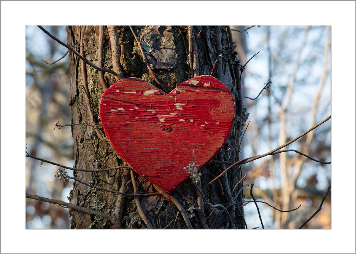 5x7 Photo Card: Heart on Tree