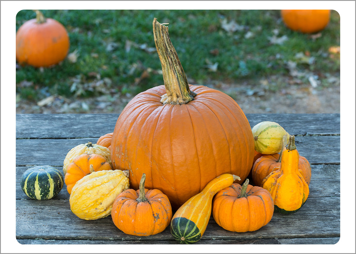 Boxed Gift Enclosures: Pumpkins on Table (Box of 5)