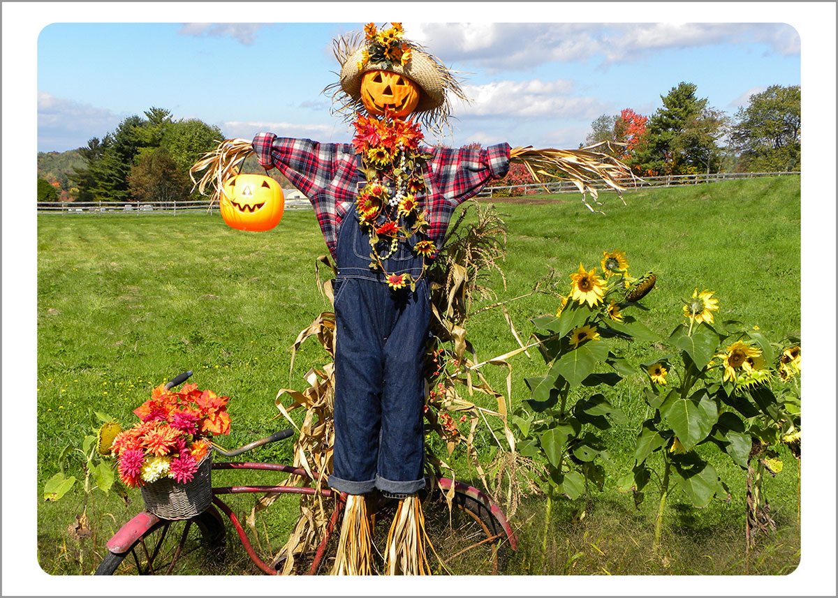 Boxed Gift Enclosures: Scarecrow (Box of 5)