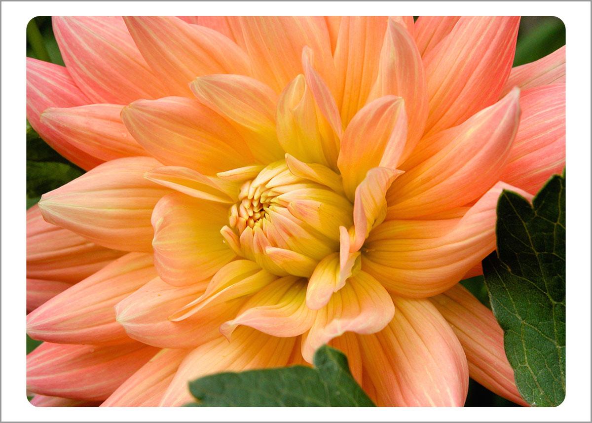 Boxed Gift Enclosures: Dahlia Light Orange (Box of 5)