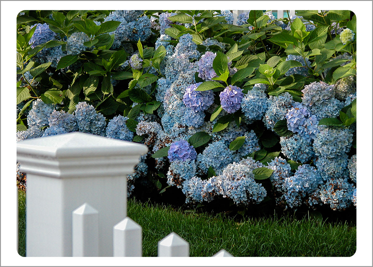 Boxed Gift Enclosures: Hydrangeas by Fence (Box of 5)