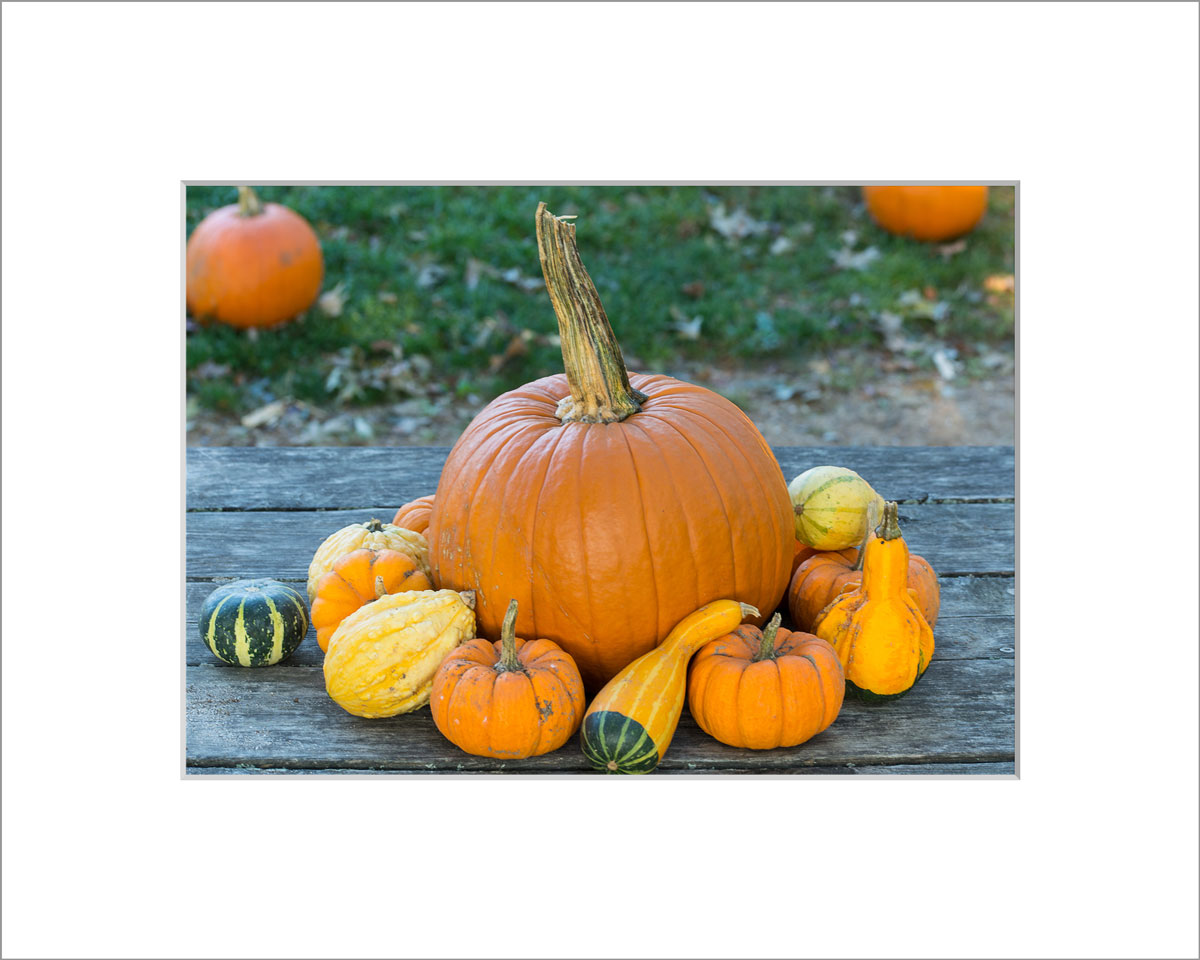 Matted 5x7 Photo: Pumpkins on Table