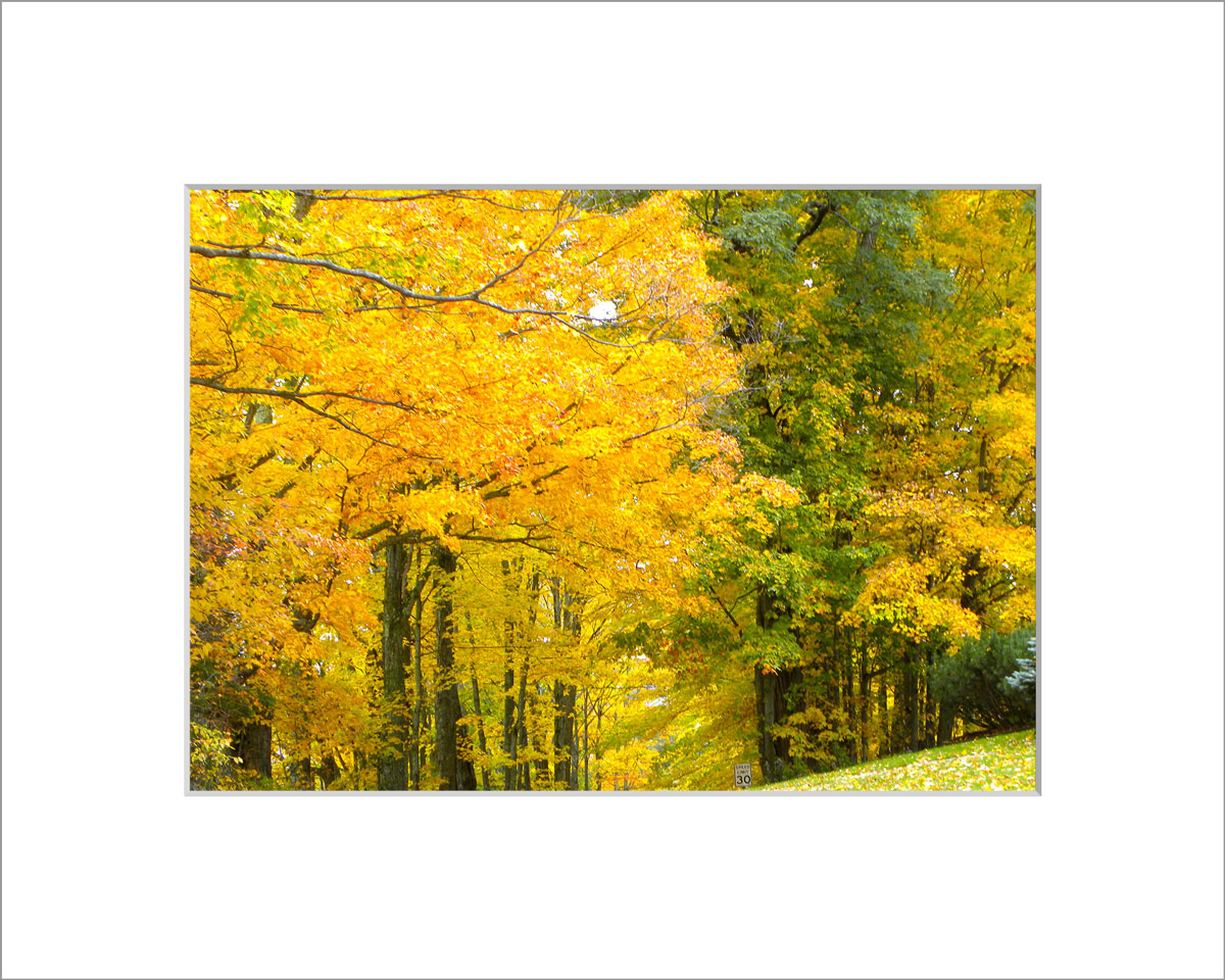 Matted 5x7 Photo: Yellow Road