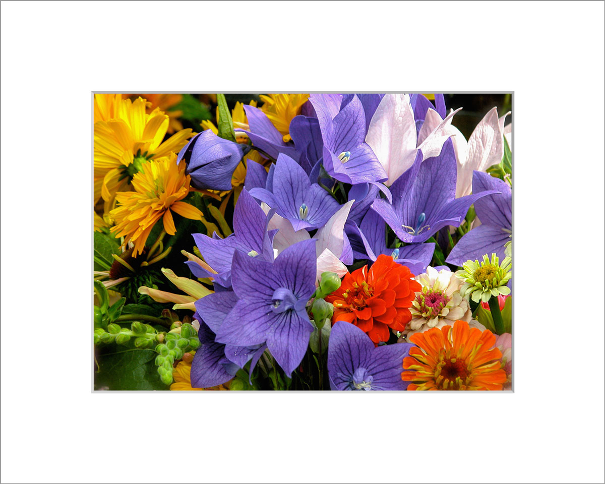 Matted 5x7 Photo: Bouquet Balloon Flower