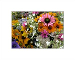 Matted 5x7 Photo: Bouquet PInk Daisy