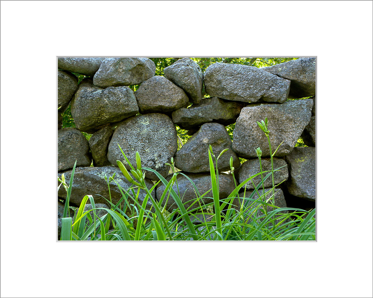 Matted 5x7 Photo: Stone Wall - Polly Hill