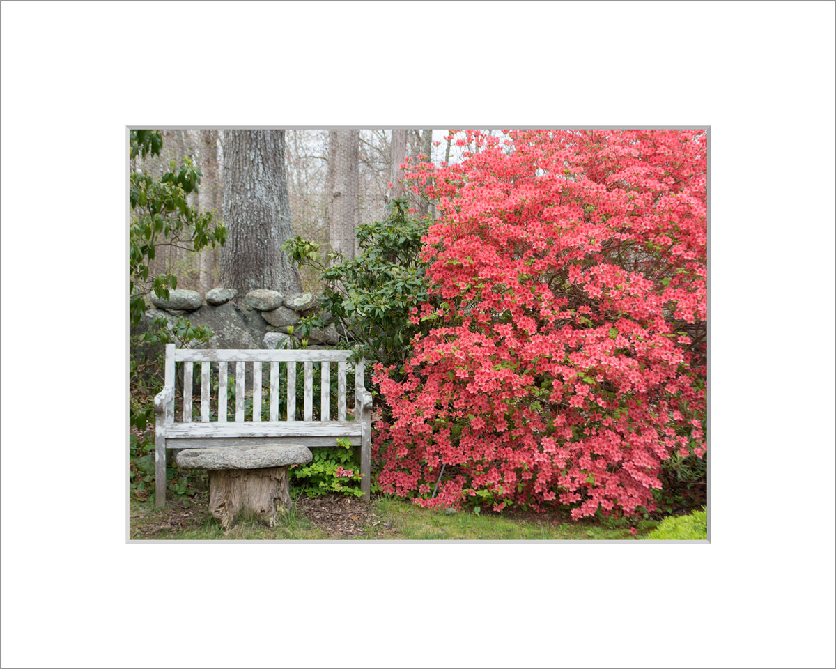 Matted 5x7 Photo: Azalea and Bench