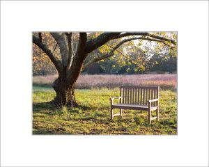 Matted 5x7 Photo: Bench at Polly HIll