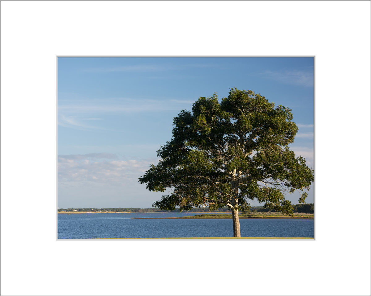 Matted 5x7 Photo: Farm Neck Tree