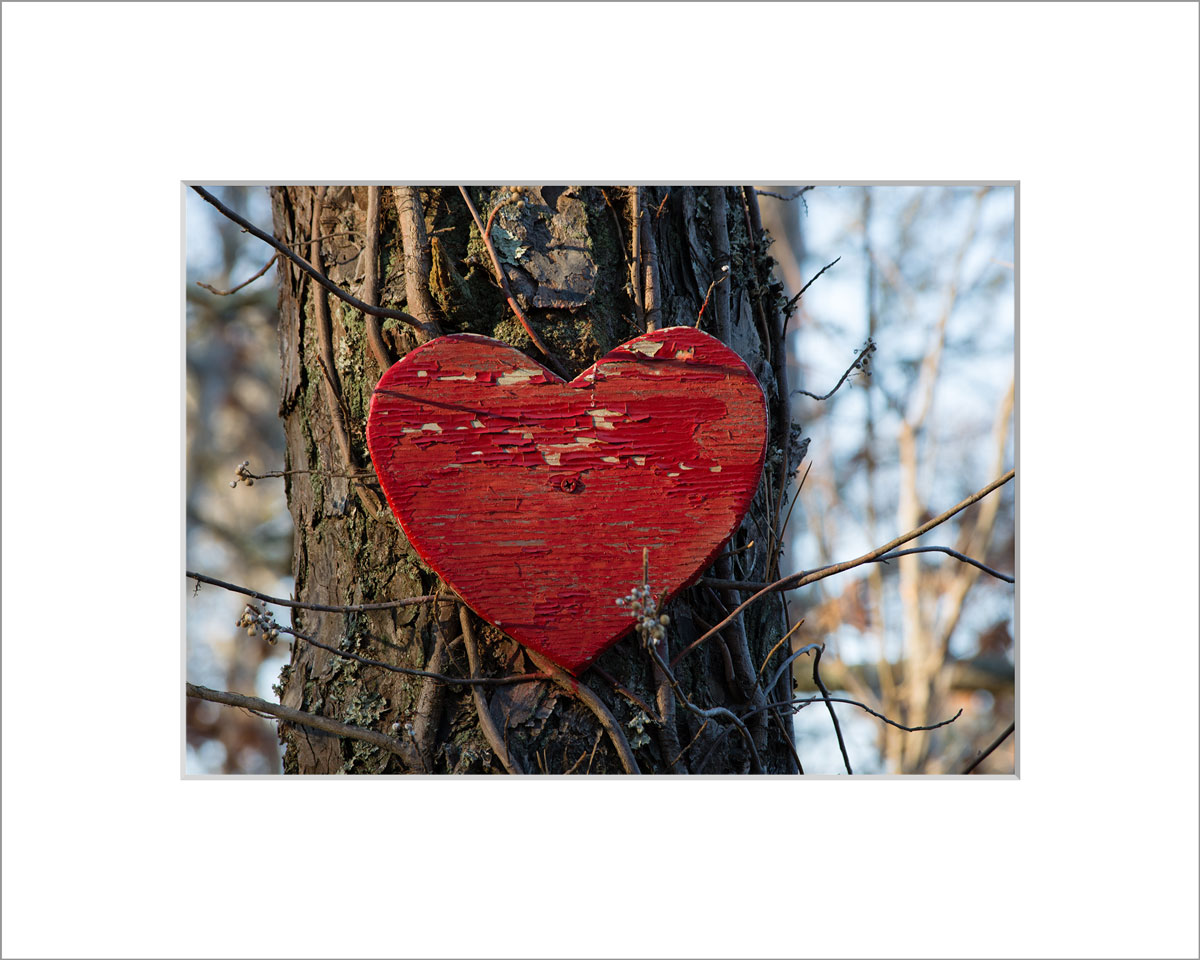 Matted 5x7 Photo: Heart on Tree