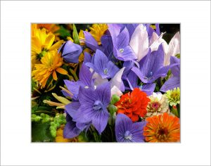 Matted 8x10 Photo: Bouquet Balloon Flower