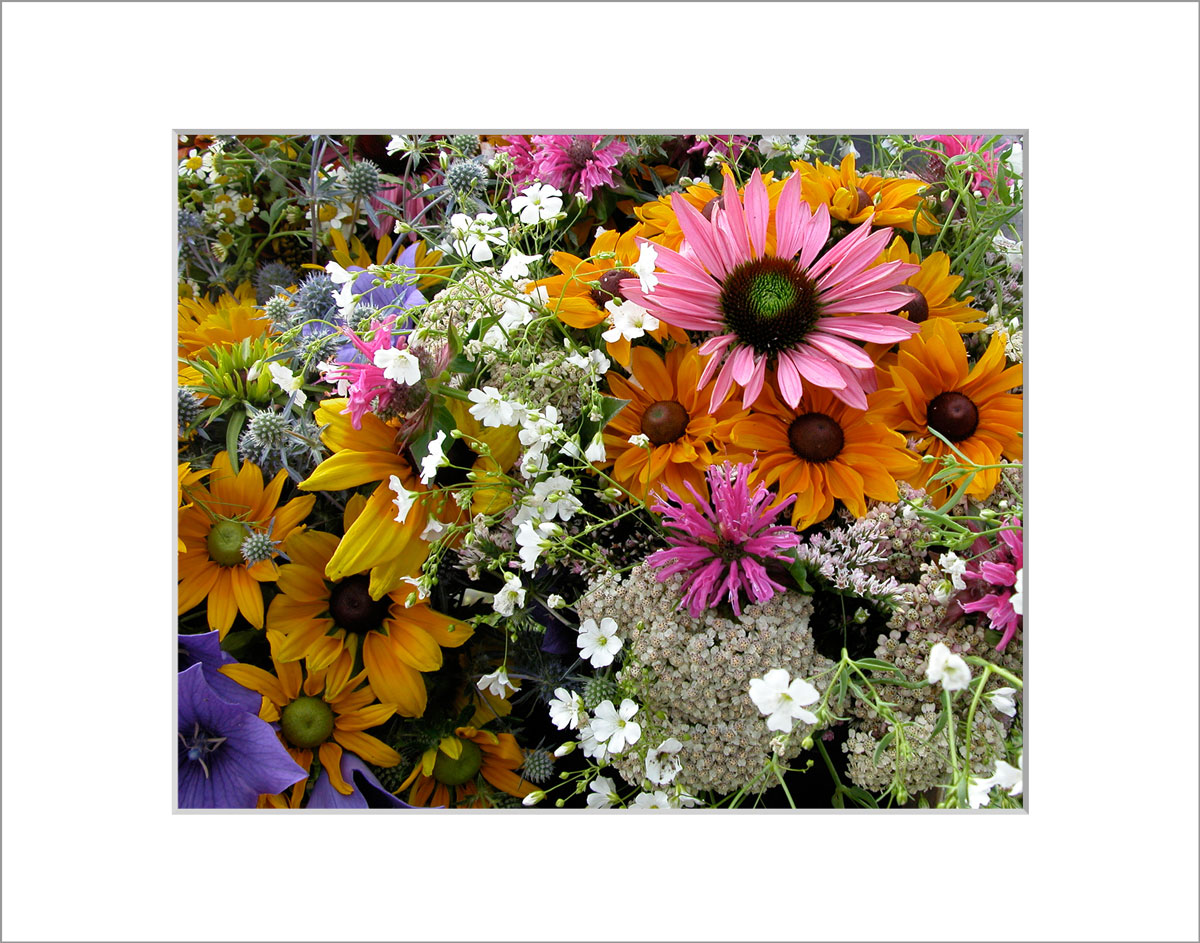 Matted 8x10 Photo: Bouquet PInk Daisy