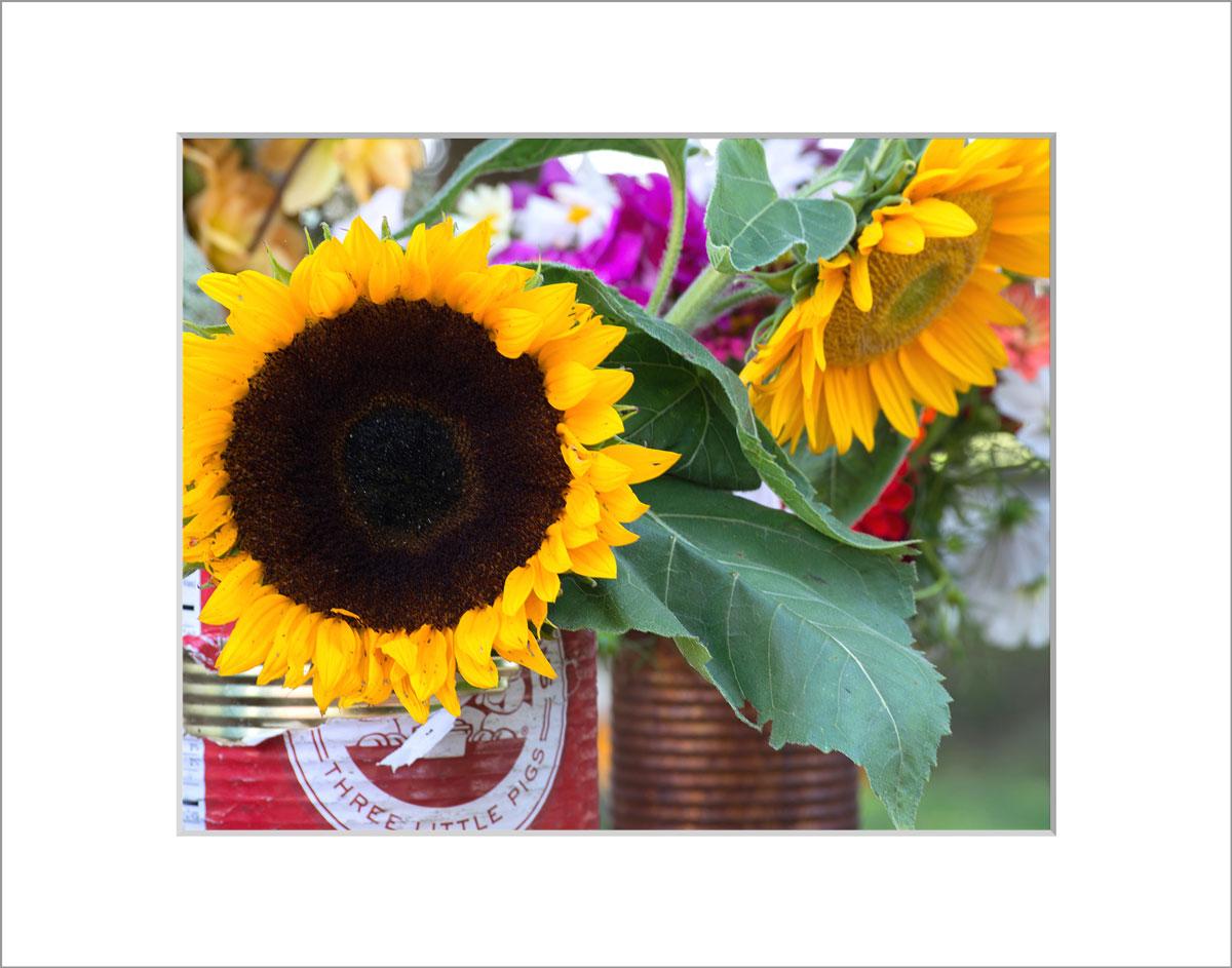 Matted 8x10 Photo: Sunflowers Farmer's Market