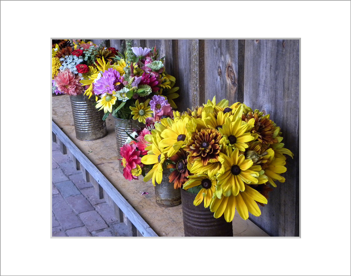 Matted 8x10 Photo: Sunflowers in Cans