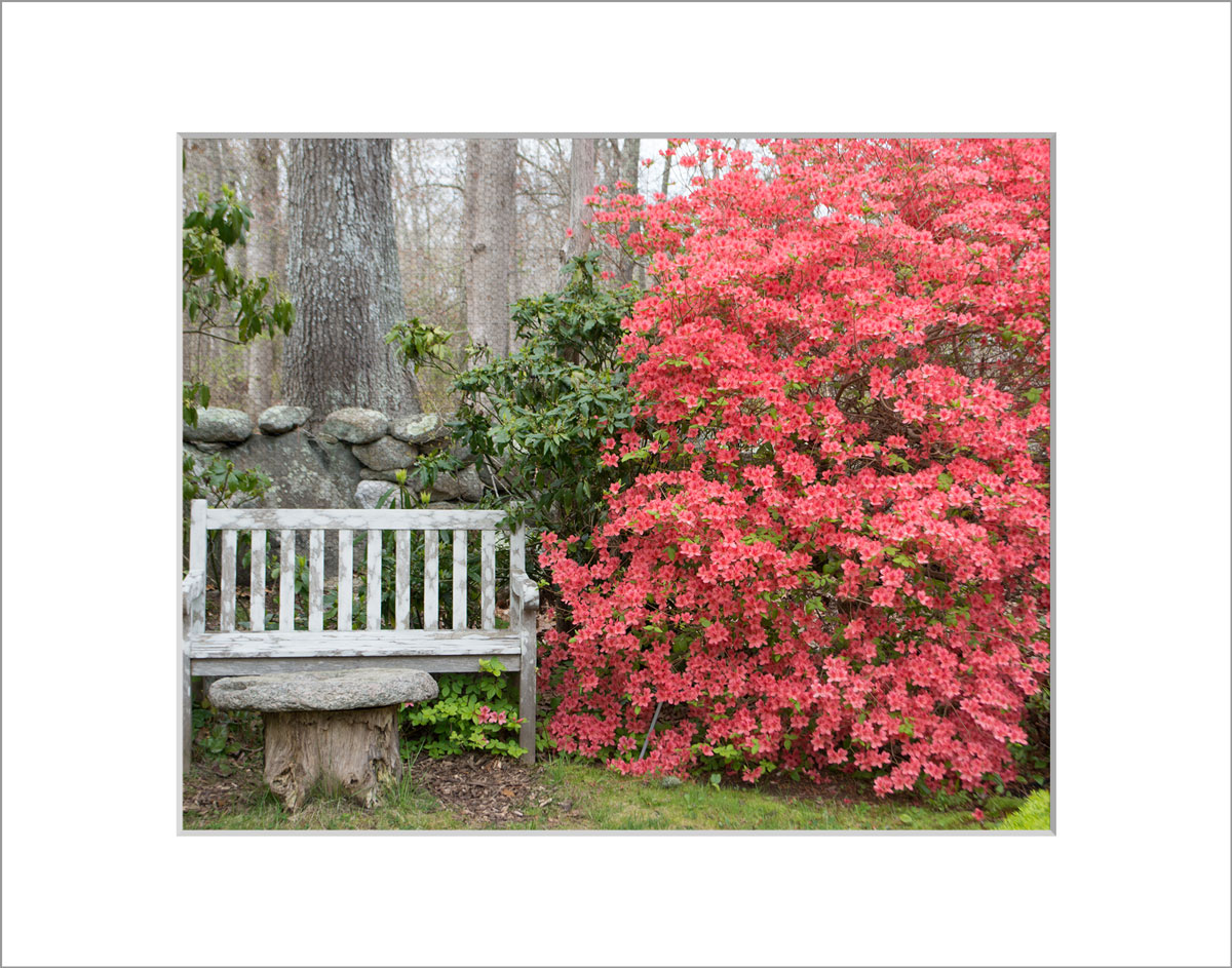 Matted 8x10 Photo: Azalea and Bench