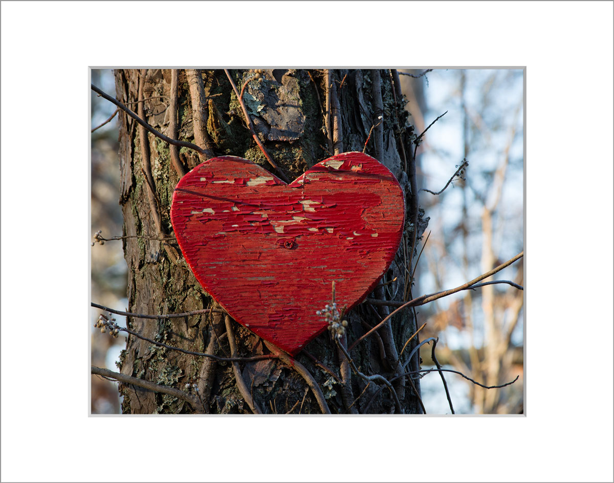 Matted 8x10 Photo: Heart on Tree