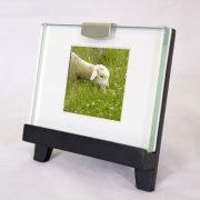 Mini Frame: Lamb Eating