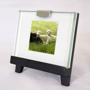 Mini Frame: Lambs Four